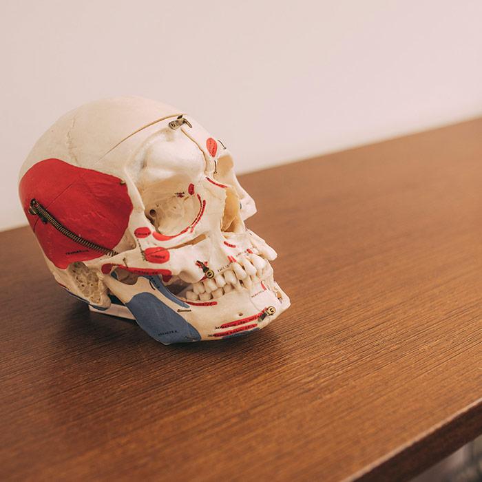 Das Modell eines Kopfes für die Ganzheitliche Zahnheilkunde in Baden-Baden.